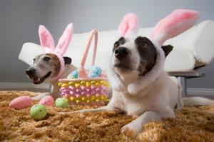 Pet Pictures with Wheaton Animal Hospital: Tips for a Great Experience