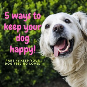5 Ways to Keep Your Dog Happy: Part Four
