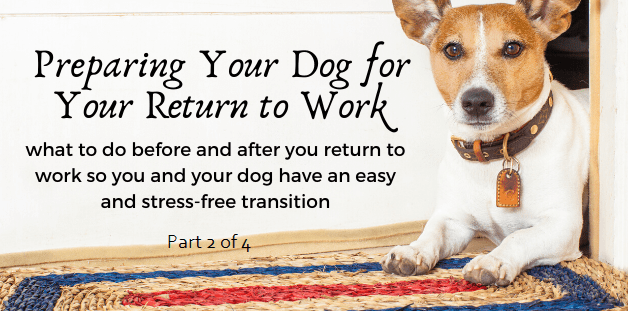 Preparing your dog for your return to work