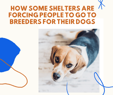 How some shelters are forcing people to go to breeders for their dogs
