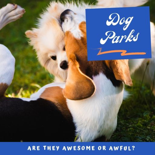 Dog parks: Are they Awesome or Awful?