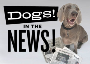 Dogs! In the News!