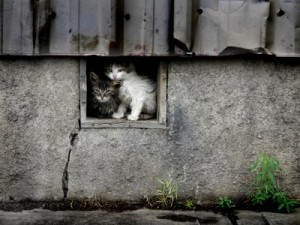 Feral Felines: How to Help