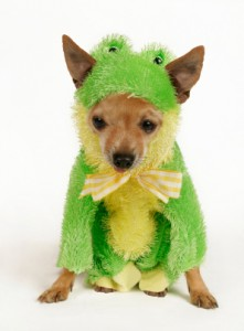 Halloween Pet Safety: No Tricks, Only Treats