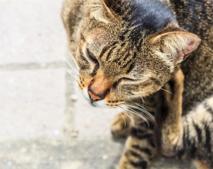 Importance of Year-Round Parasite Prevention for Pets