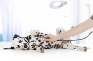 Protect Your Dog Against Canine Influenza