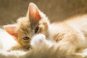 What You've Always Wanted to Know About Pet Ear Care