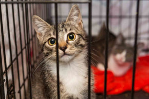 Giving Back: Ideas for Helping Shelter Pets During the Holidays