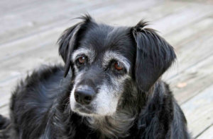 Finishing Strong: The Benefits of Exercising a Senior Pet