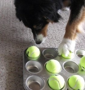 How to stop your dog from chewing up all your stuff