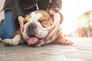 Struggling to Breathe: When Your Pet Has Asthma