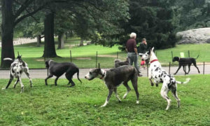 Five Things to do with Your Dog in New York City