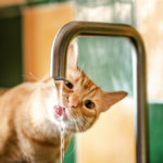 Wheaton Veterinary Advice: How Much Water Do Your Pets Need?