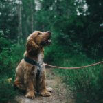 Does Your Dog Need a Hobby?