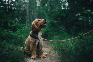 What You Should Teach Your Dog and Why