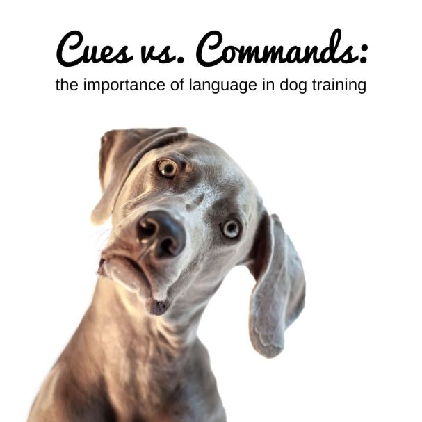 Cues vs. Commands: The Importance of Language in Dog Training